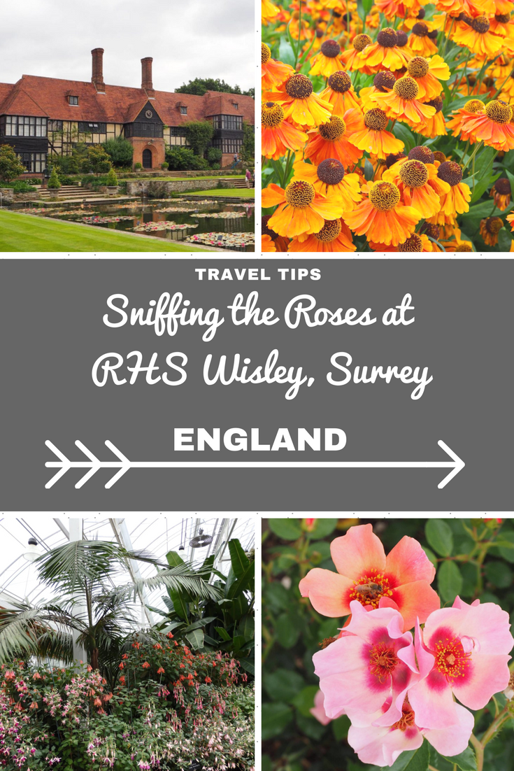 England Travel Inspiration - Visiting All The English Counties 22/48 - Sniffing the Roses at RHS Wisley, Surrey. Looking for gardening inspiration then a visit to the beautiful Royal Horticultural Society garden during summer when it's bursting with colourful flowers and plants is a must. Click to see more photos!